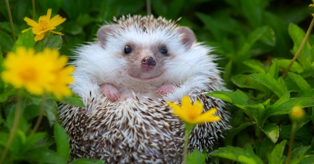 Hedgehog Supplies
