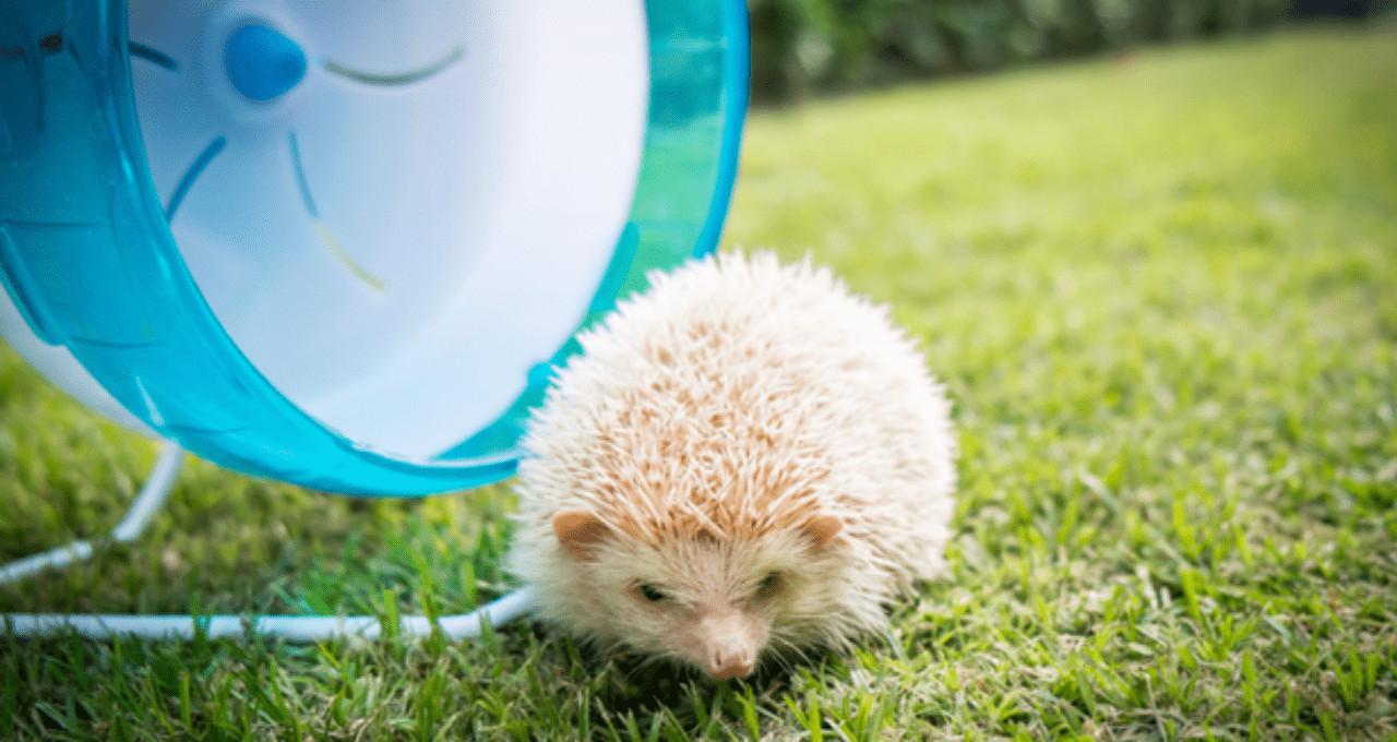 Best hedgehog wheel